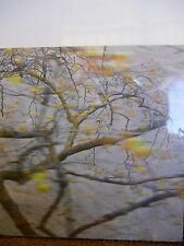 Memory of Trees by Kathryn Cook new hardcover book about the Armenian Genocide