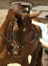 Rhinegold Leather Comfort Snaffle Horse Bridle Padded   All Sizes, Dressage