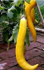Vegetable Brinjal - Long Yellow Eggplant - Hybrid F1 Vegetable Seed- 25 Seeds