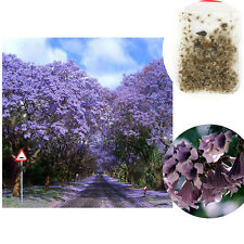 100pc Paulownia Royal Empress Princess Tree Fastest Growing Tomentosa Seed Easy