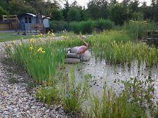 45 wasserreinigende Teichpflanzen Filterpflanzen bis 50 cm Wasserstand Sortiment