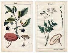 Giftpflanzen-Botanik - altkol. Lithographie Schreiber-Esslingen 1835 Pflanzen