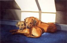 RHODESIAN RIDGEBACK RRB DOG FINE ART LIMITED EDITION PRINT - Mothers Love