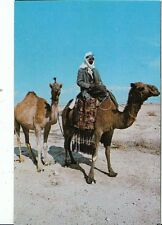 Middle East Postcard - Beduin On His Camel   AB1020