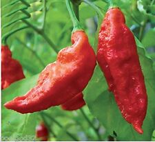 Miracle Gro AeroGarden Ghost Pepper 9 Pod Seed Kit Hydroponics nutrient Gourmet
