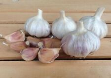 German Red,For planting (3 Large Heirloom Bulbs)Untreated,Organic!