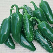 """Jalapeno M Pepper *Heirloom* (50 Seed's) """"FREE SHIPPING""""  Non-GMO"""