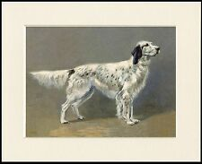 ENGLISH SETTER STANDING DOG LOVELY PRINT MOUNTED READY TO FRAME