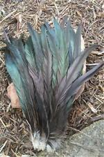 20 IRIDESCENT BRONZE ROOSTER COQUE TAIL FEATHERS 14-16