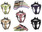 Gooby Luxury Step In Dog Harness or Matching Leash or Collar S M L Puppy Lead