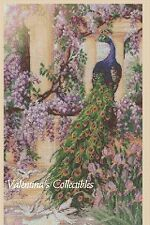 Counted Cross Stitch PEACOCK-  COMPLETE KIT - No. 2-334 KIT