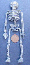 Plastic Old Looking Skeleton Dolls House Miniature Witch, Halloween Cupboard