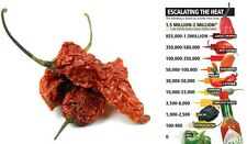 10g Dried Chilli Chili Naga Bhut Jolokia - Ghost Pepper very hottest hot