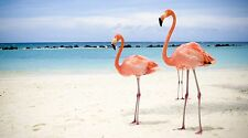 "Pink Flamingo Birds on the Beach - 42"" x 24"" LARGE WALL POSTER PRINT NEW."