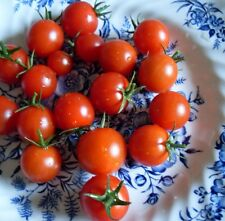 Large Red Cherry Tomato Seeds - 25+Seeds