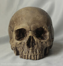 HUMAN SKULL REPLICA, full size dark weathering, hand made from plaster of Paris