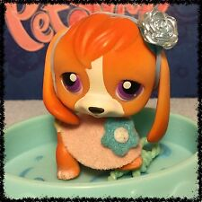 LITTLEST PET SHOP #301 ORANGE AND WHITE BEAGLE WITH PURPLE EYES w/ Accessories