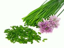 150 CHIVES 2017 (all non-gmo heirloom vegetable seeds!)