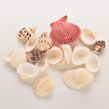 Sea Shells Shell Craft Aquarium Beach SeaShells Mixed Randomly Gift FG
