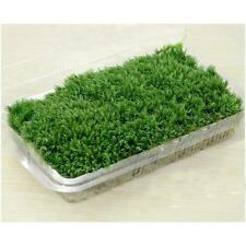 Hot Sale 100% Natural Forest Carpet Moss For Terrarium Decoration