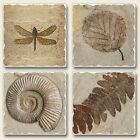 Mixed Absorbent Stone Coasters Set 4 Fossils Artwork Shell Dragonfly Leaf