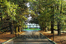 Golf  Poster/Photo - Magnolia Lane Augusta National/4x6 inches