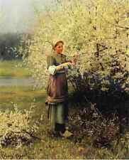 Knight DANIEL RIDGWAY Spring Blossoms stampa in A4