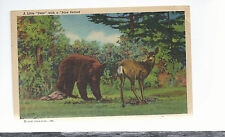 A Little Dear With A Bare Behind  Humor    Mailed 1951  Postcard 644