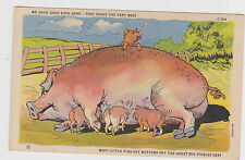 Postcard - CUTE MAMA PIG AND BABIES Comic Style c-164 Rare
