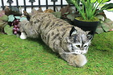 Brown Bob Cat Stalking Realistic Furry Animal Taxidermy Figurine Replica Bobcat