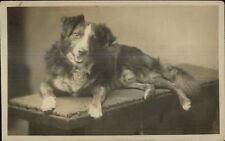 Beautiful Collie Dog Smiling For the Camera c1920 Real Photo Postcard