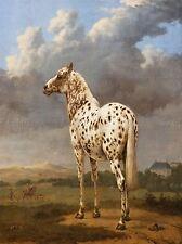 PAINTING ANIMAL PAULUS POTTER PIEBALD HORSE ART PRINT POSTER LAH408A