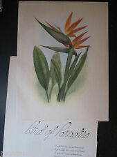 1947 Bird of Paradise Flower Print by Mundorff, In an Old Hawaiian Garden book