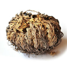 Stunning Resurrection Plant Rose Of Jericho Dinosaur Plant Air Fern Spike NoJC9X