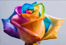 Rose Flower seed - Rainbow Rose 7 seeds, Imported High Quality Seeds