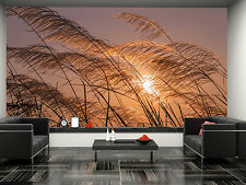 Grass Flowers During Sunset Wall Mural Photo Wallpaper GIANT DECOR Paper Poster