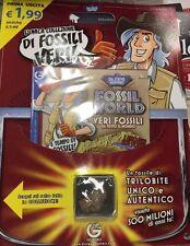 FOSSIL WORLD - VERI FOSSILI DA TUTTO IL MONDO - 1* USCITA, Trilobite