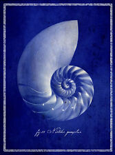 SEASHELL ART PRINT Nautilus Shell GI Art Lab 26x36 Sagebrush