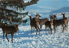 BF39189 stags cerf deer switzerland   animal animaux
