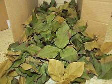 525 Wholesale Artificial Leaf Fake GREEN  TAN  Leaves Wedding Silk Flower Craft