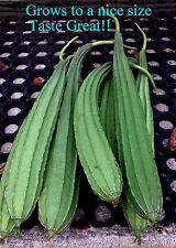 Angled gourd, Chinese Okra 25+ Seeds, A Edible Vegetable while they last!