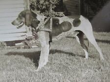VINTAGE ANTIQUE SHORT HAIRED GERMAN POINTER COLLAR HUNTING DOG ARTISTIC PHOTO