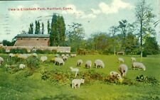 Hartford, CT y Barn and Grazing Sheep in Elizabeth Park 1911
