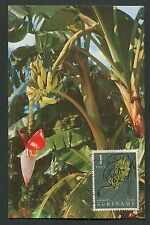 SURINAME MK 1961 FLORA FRÜCHTE BANANEN MAXIMUMKARTE MAXIMUM CARD MC CM d7791