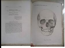 OTTOCENTINA ANTROPOLOGIA DELL'ETRURIA NICOLUCCI 1869