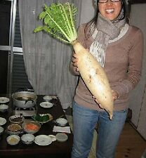3g (appr.330) giant daikon radish seeds MINOWASE/ SUMMER CROSS very low calories