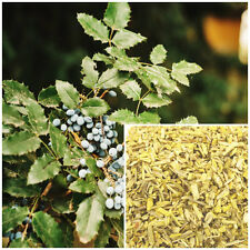 Oregon Grape Root, 1 oz, organic,  soap making supplies,herbal extracts,salves