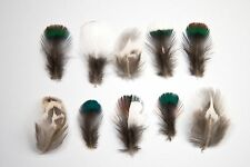 15 x Natural Mixed White Green Blue Striped Black Pheasant Feathers Very Small