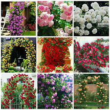 Very Rare Climbing Rose Seeds 9 Types (5 seeds each) + other free seeds
