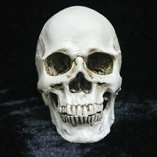 White Resin Replica Human Anatomy Skull Real Halloween Horror Decoration Funny